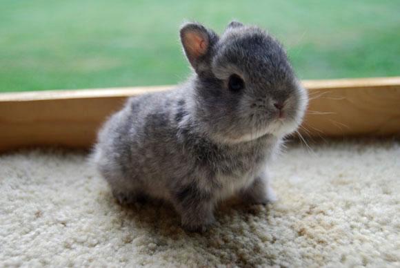 子ウサギ61