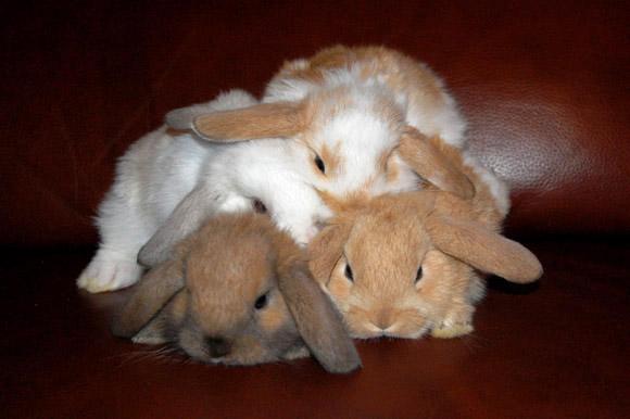 子ウサギ62