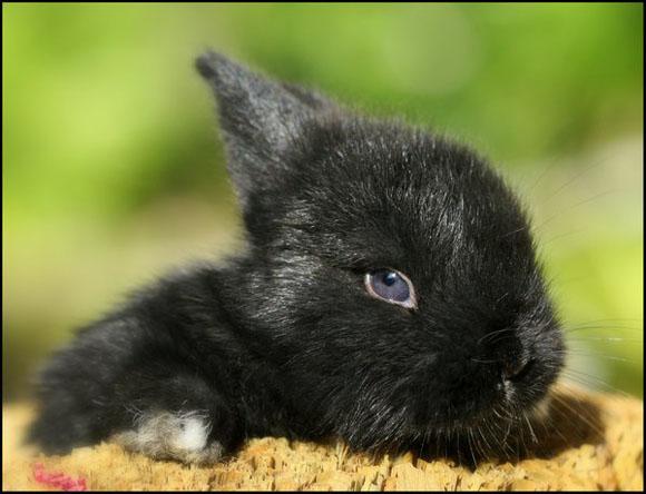 子ウサギ63