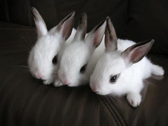 子ウサギ65