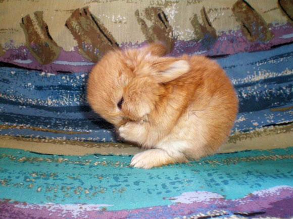 子ウサギ67