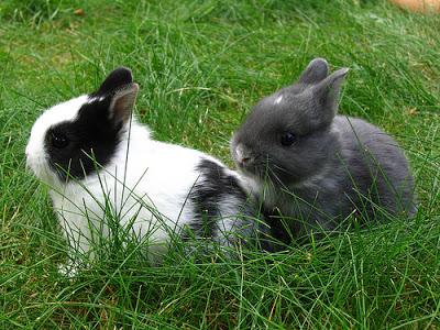 子ウサギ7
