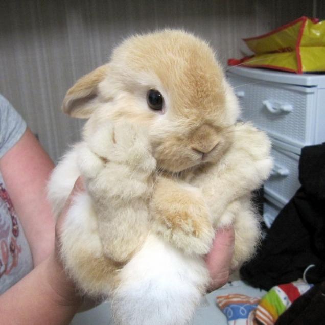 子ウサギ70