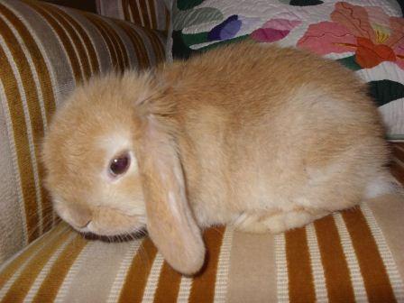 子ウサギ73
