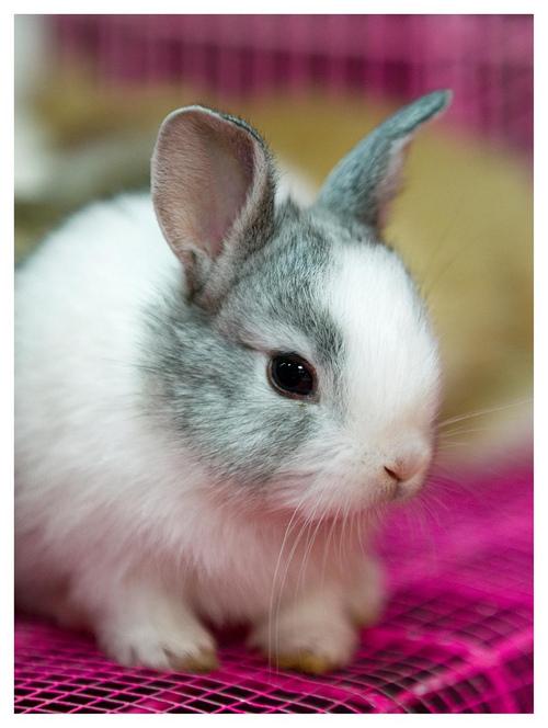 子ウサギ8