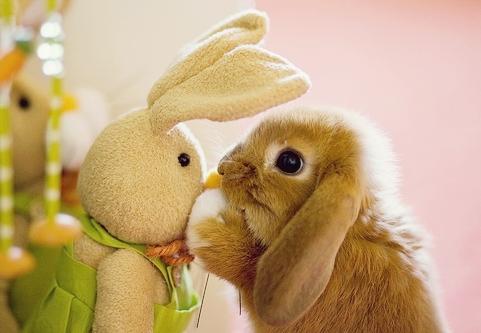 子ウサギ9
