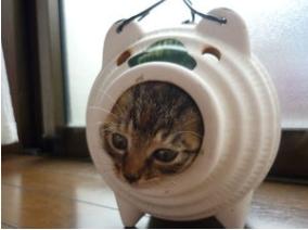 狭いとこ好き猫10