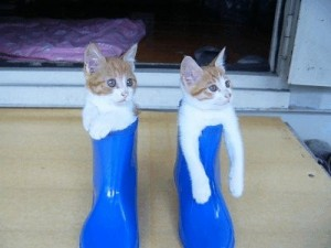 狭いとこ好き猫11