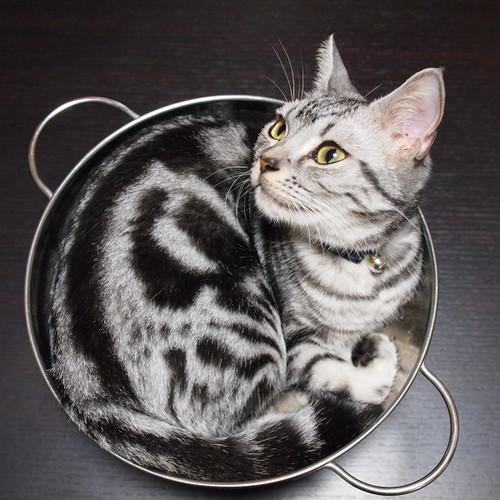 狭いとこ好き猫17