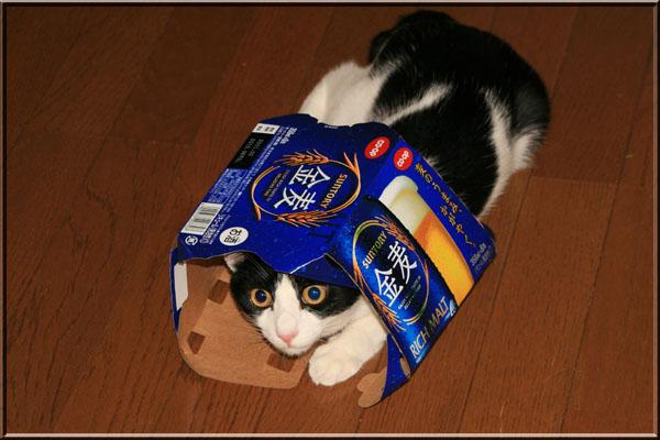 狭いとこ好き猫18