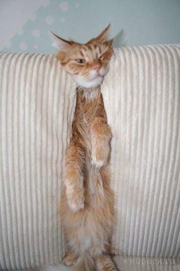 狭いとこ好き猫21