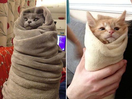 狭いとこ好き猫4