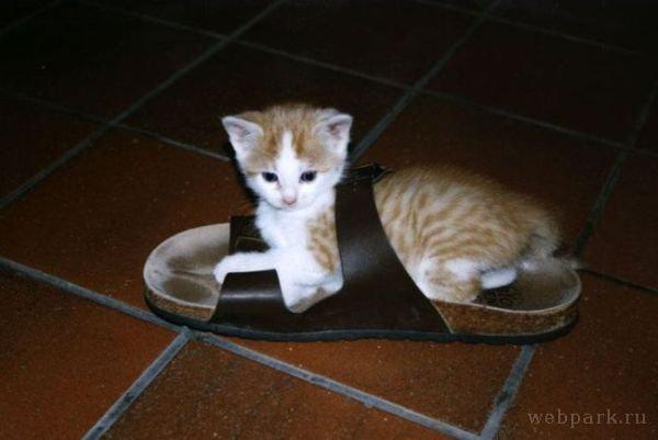 狭いとこ好き猫8