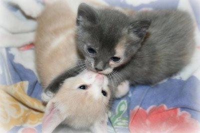 キスをする猫12