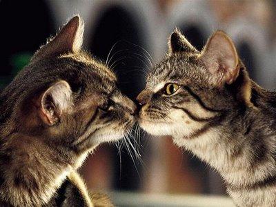 キスをする猫13