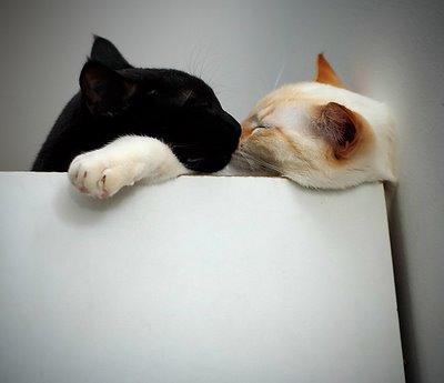 キスをする猫26