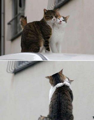 キスをする猫27