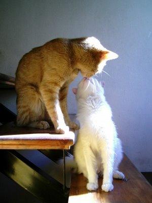 キスをする猫32