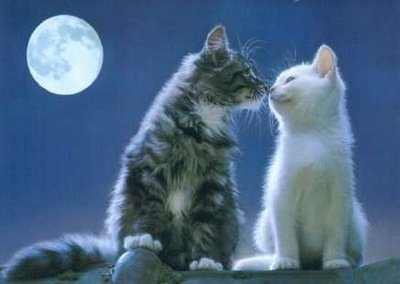 キスをする猫4