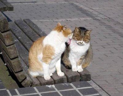 キスをする猫5