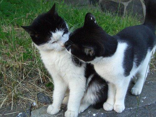 キスをする猫8