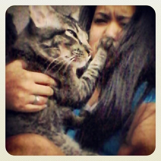 キスを拒む猫5