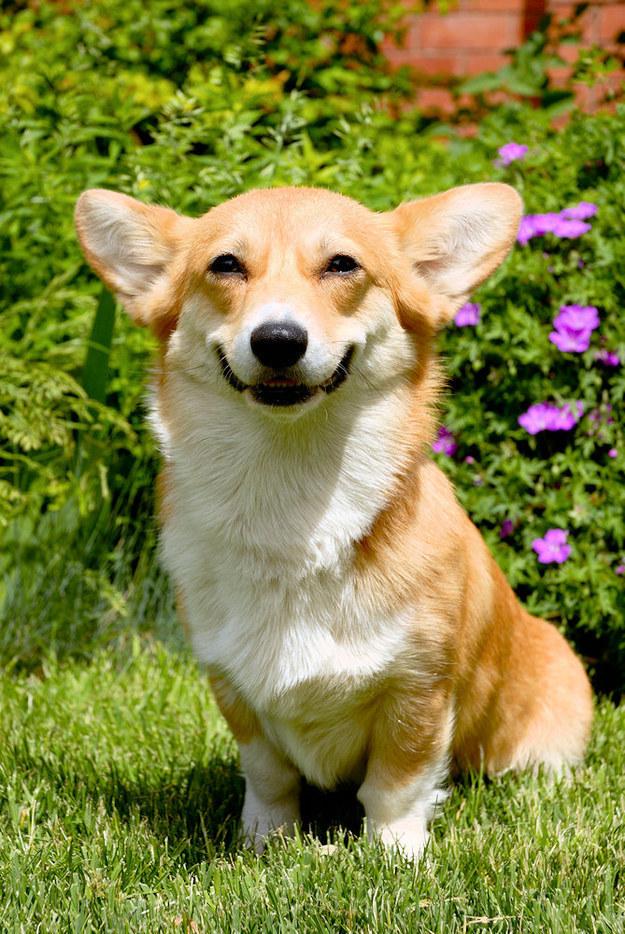 幸せそうな動物たち13