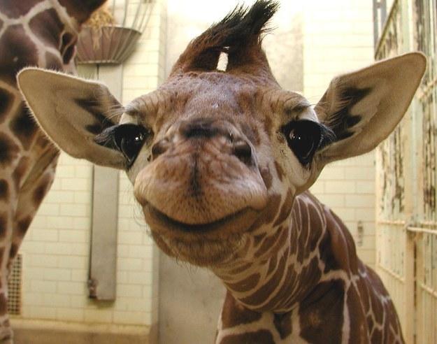 幸せそうな動物たち14