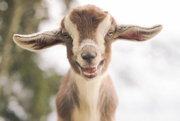 幸せそうな動物たち26