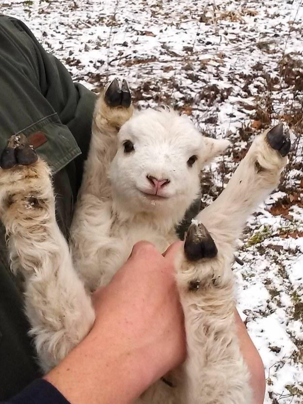 幸せそうな動物たち49