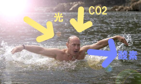 プーチン10