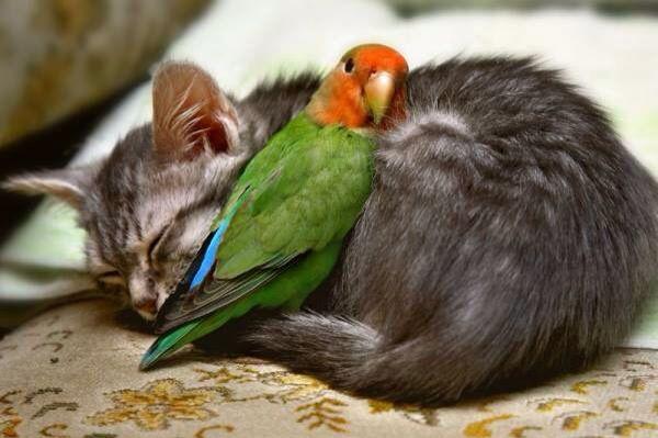 仲良し動物1