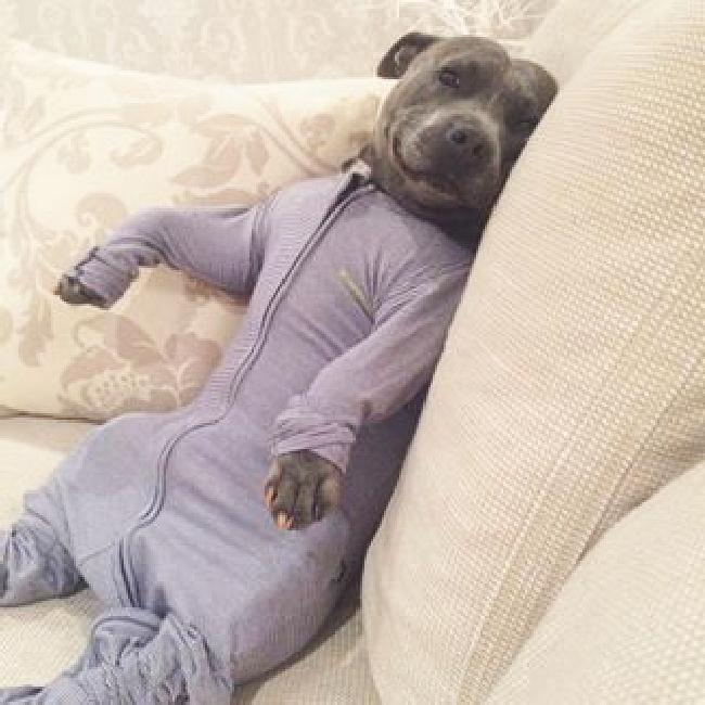 パジャマ犬1
