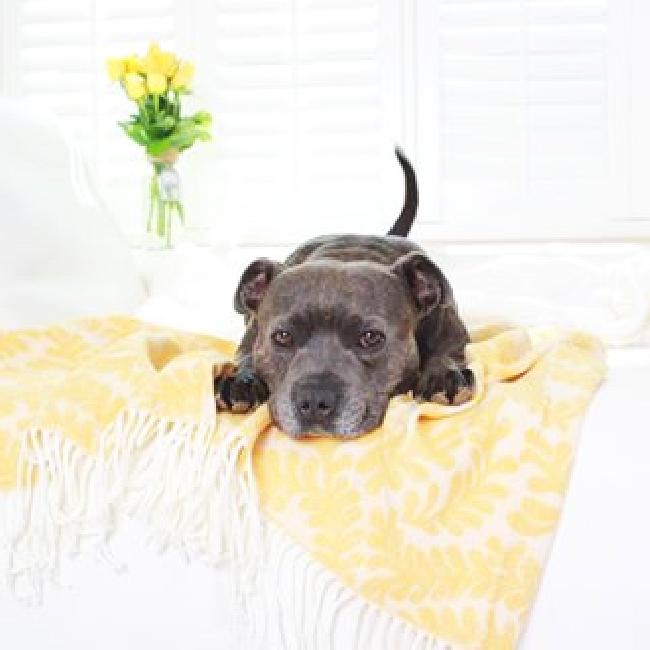 パジャマ犬16
