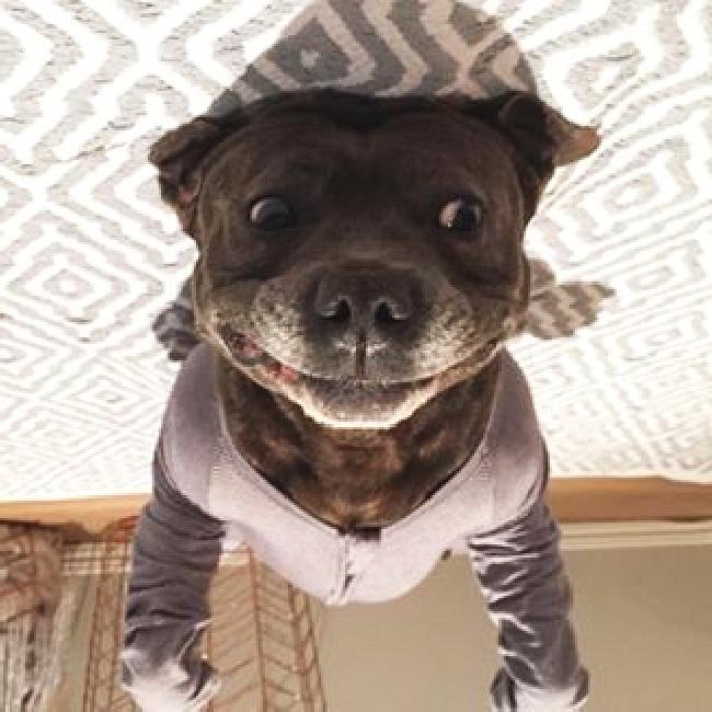 パジャマ犬30