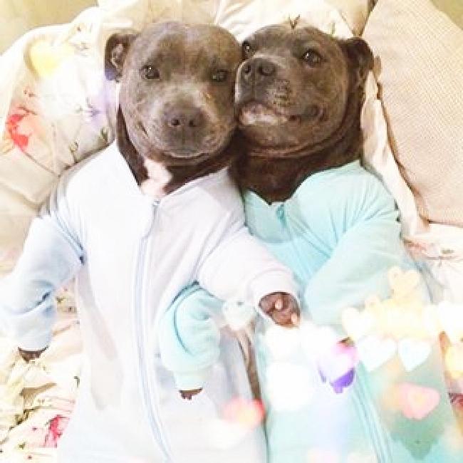 パジャマ犬6