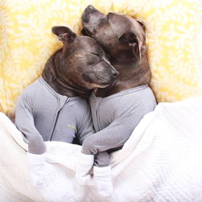 パジャマ犬64