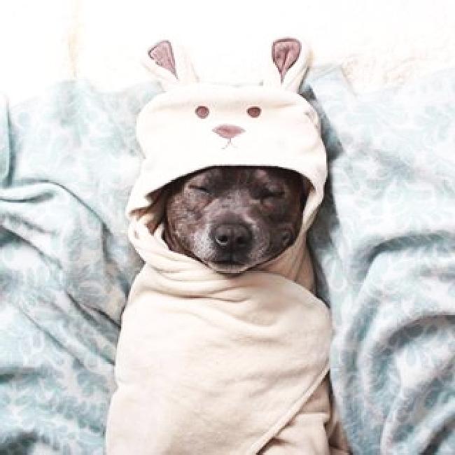 パジャマ犬65