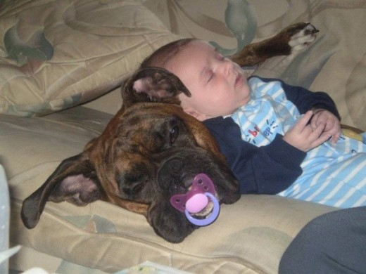 赤ちゃんと仲良し2