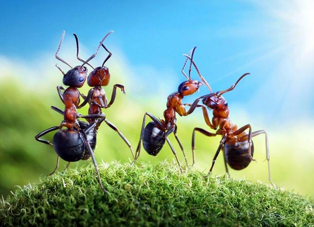 蟻アート17 (2)