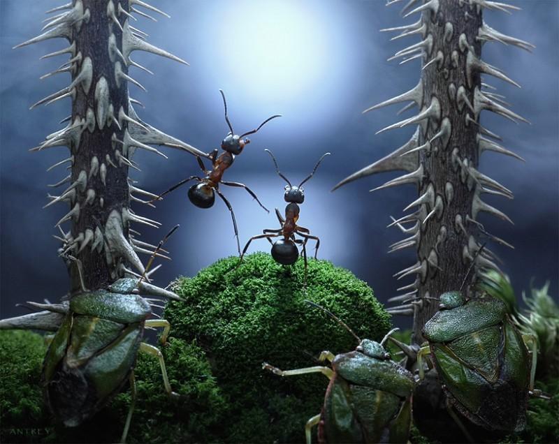 蟻アート17