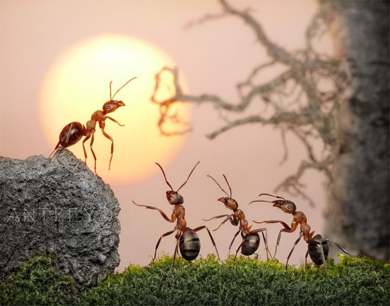 蟻アート5