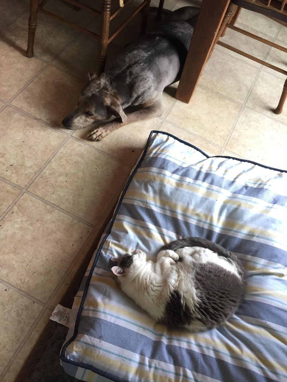失った犬と奪った猫1