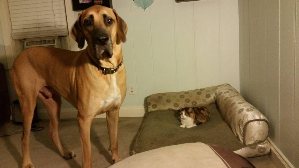 失った犬と奪った猫17