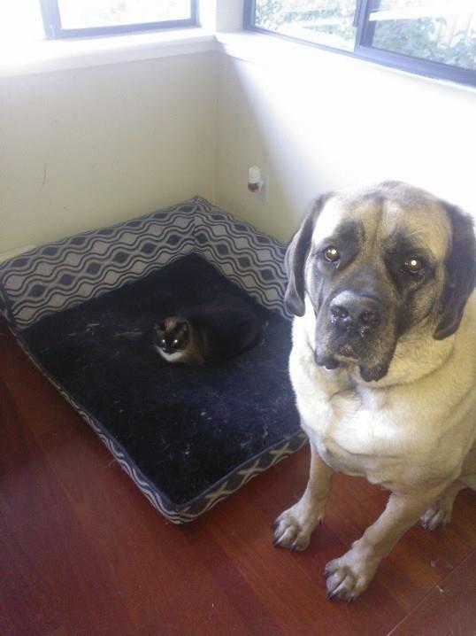 失った犬と奪った猫18