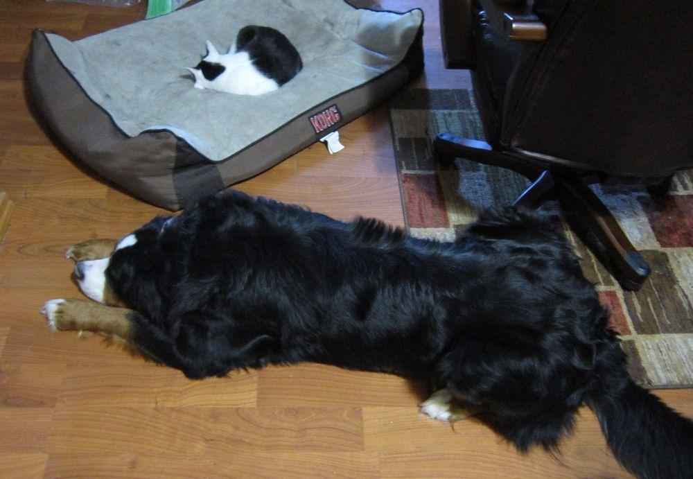 失った犬と奪った猫2