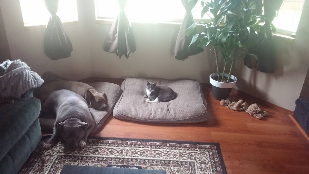 失った犬と奪った猫20