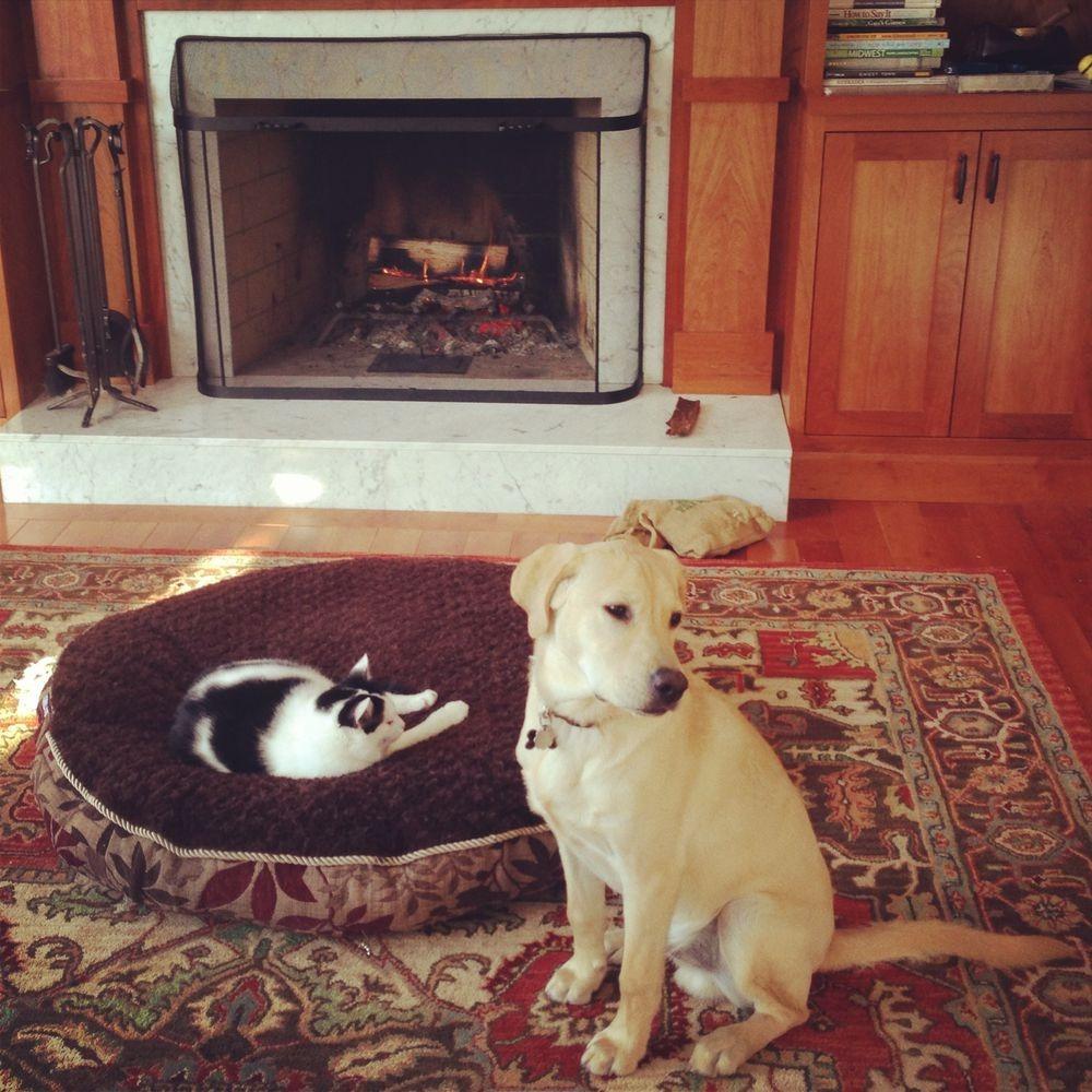 失った犬と奪った猫24