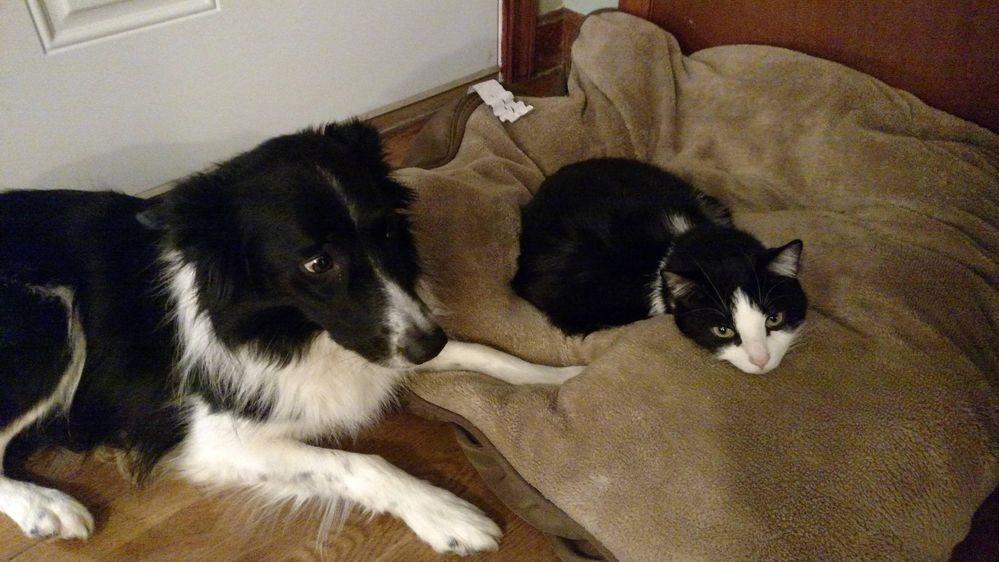 失った犬と奪った猫3
