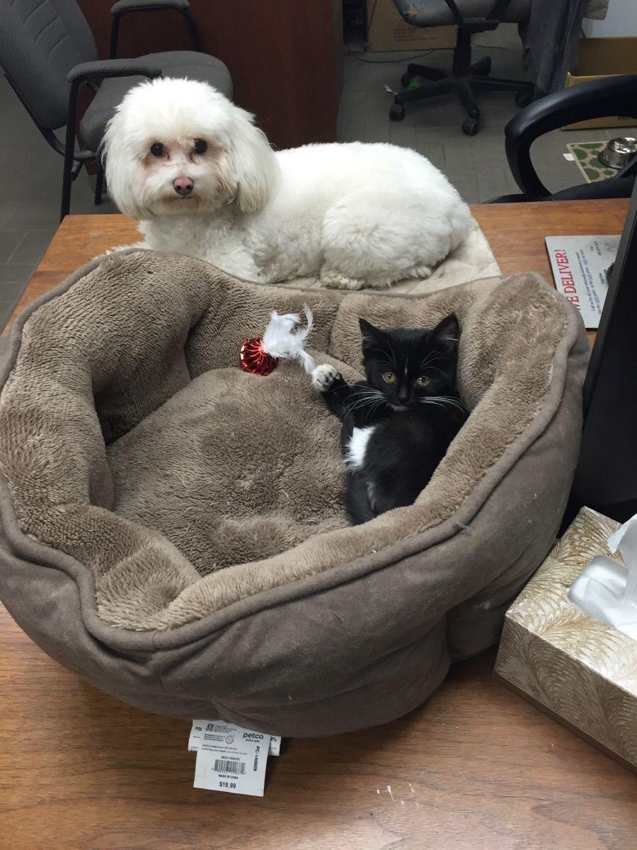 失った犬と奪った猫4